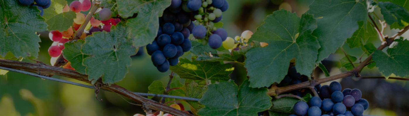 May named Tennessee Grape and Wine Appreciation Month | UCBJ - Upper